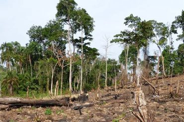 Our-forest-cleared.-Bugoma-Forest-boundaries-2014.-ft